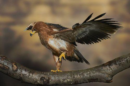Roofvogel van