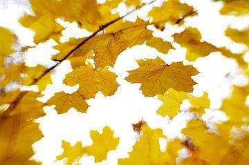 Herfstblaadjes in de wind van Marian Steenbergen