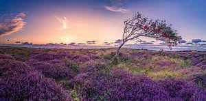 De Bollekamer - Heide - Texel von