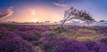 De Bollekamer - Heide - Texel sur Texel360Fotografie Richard Heerschap
