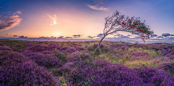 De Bollekamer - Heide - Texel