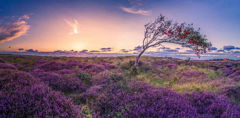 De Bollekamer - Heide - Texel von Texel360Fotografie Richard Heerschap