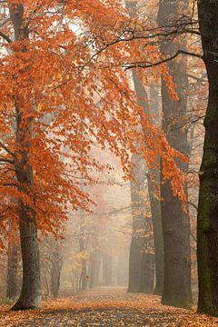 Herbstlicher Waldweg von Jana Behr