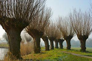 Dutch Willows von Georges Hoeberechts