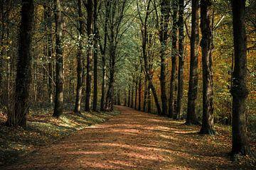 La forêt peinte sur