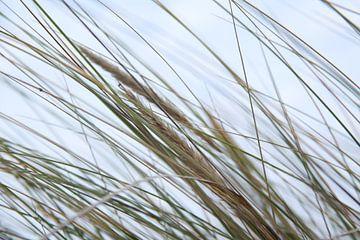 Seagrass van Fotostudio Freiraum
