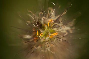 Blume 1 von Esther Erkelens