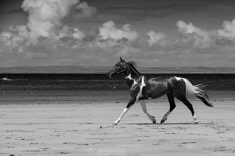 Happy Horse van Andreas Müller