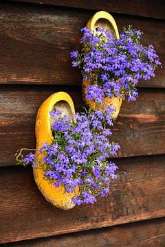 Traditionelle holländische Holzschuhe mit violetten Blumen. von Catalina Morales Gonzalez