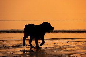 chiot au coucher du soleil sur Annelies Cranendonk