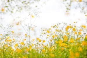 Yellow embrace - Boterbloemen sur Andrea Gulickx