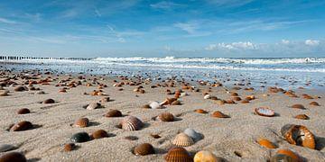 Muscheln am Strand von Dirk Huckriede