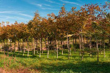 Bomenrij in Spanje van Peter Schütte