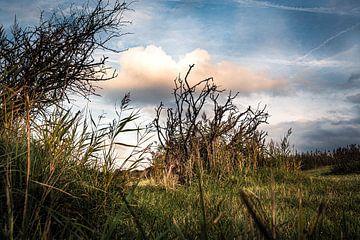Riet en takken tegen een wolkenlucht van MICHEL WETTSTEIN