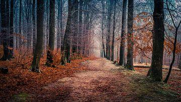 Colours of nature van Wim van D
