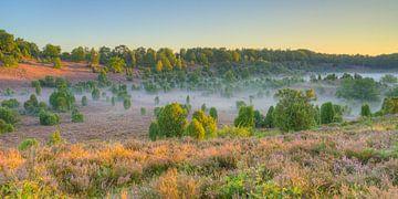 In de ochtend in de Lüneburger Heide van Michael Valjak