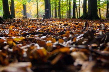 Herfst van Evelyne Renske