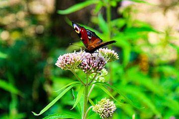 Vlinder op bloem van Gwyn de Graaf