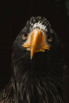 eagle von Lars Hoppe