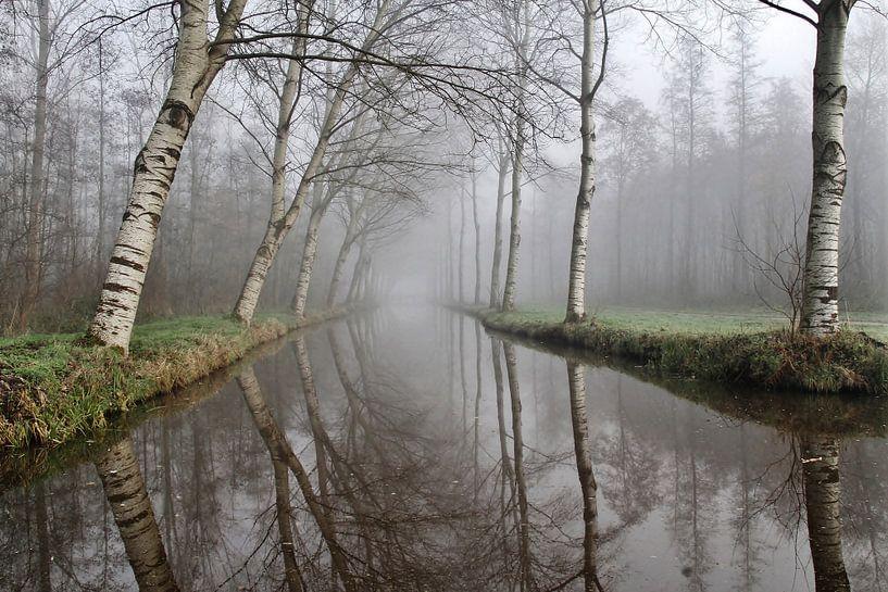 Wingerdse bos van Annemieke van der Wiel