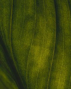 Groene nerven #1 van Jeffrey Hoorns
