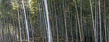 bamboewoud kyoto van Stefan Havadi-Nagy