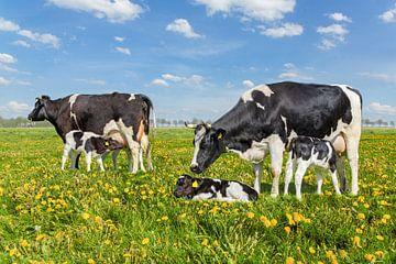 Twee koeien met drinkende kalfjes in Nederlandse weide met paardenbloemen van Ben Schonewille
