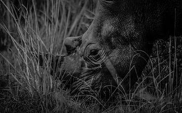 African White Rhino van linda ter Braak