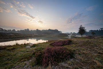 Mistige zonsopkomst Zeist Heidestein Utrechtse heuvelrug! van Peter Haastrecht, van