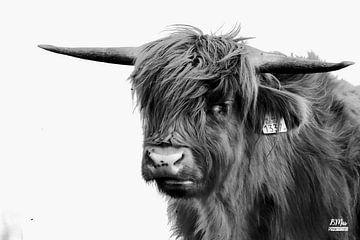 Schotse hooglander (zwart wit) van Bart van Mastrigt