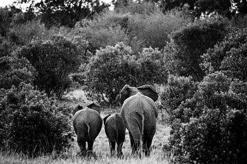 Olifanten op de Masai Mara, Kenia van Marvin de Kievit