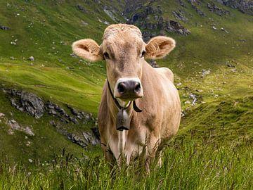 Kuh auf der Alm  in den Schweizer Alpen von Werner Dieterich