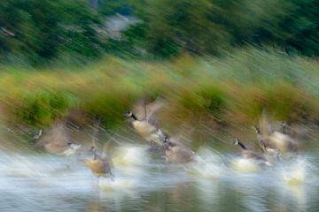 Chaos van Richard Guijt Photography