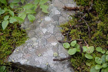 Mospatroon op rots van Arjen Tjallema