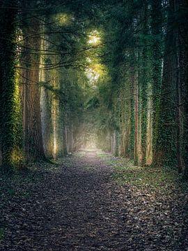 Ein Spaziergang im Park von Wim van D