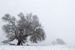 Weide in einer Winterlandschaft von Irene Damminga