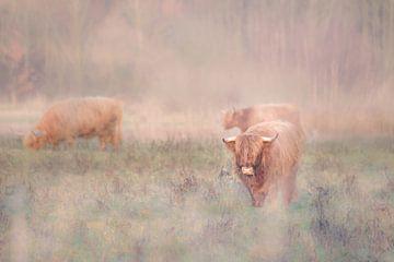 Schotse hooglander in de mist van Ellen Metz