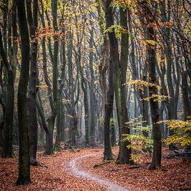 Het pad van Linda Raaphorst