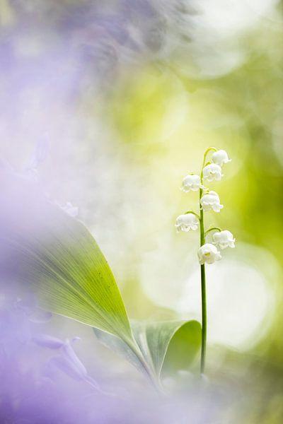 Spring doesn't lose its loveliness van Bob Daalder