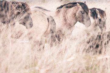 Chevaux sauvages à Oostvaardersplassen sur Kimberley Jekel