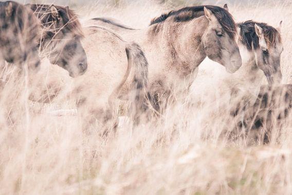 Wilde paarden in Oostvaardersplassen van Kimberley Jekel