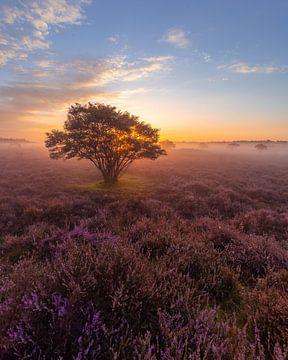 Zonsopkomst op de heide in Bussum van Michiel Dros