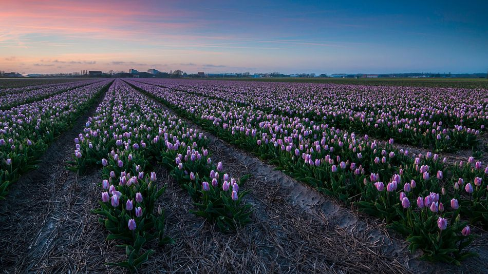 Zonsondergang over de Bollenvelden van Martijn van der Nat