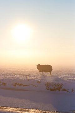 Schaap in winterlandschap van Fotografia PB