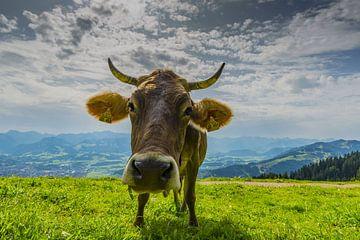 Koe, Allgäu van Walter G. Allgöwer