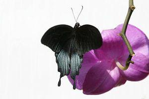 Vlinder op orchidee  van Tessa Louwerens