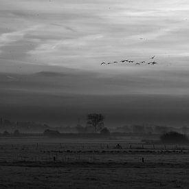 Flanderns Felder von han Soete