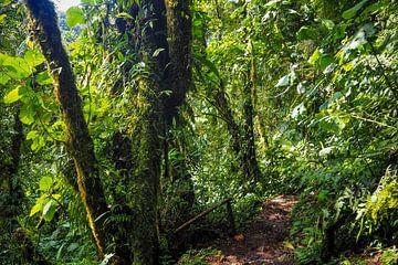 Wandern im panamaischen Dschungel