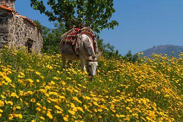 The Molyvos Mule van Leanne lovink