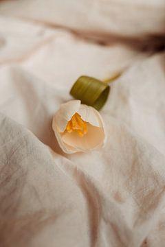 Weiße Tulpe von Elise Debije